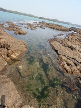 Cool tide pools